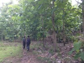 Pengamatan sekitar hutan tanaman Jati