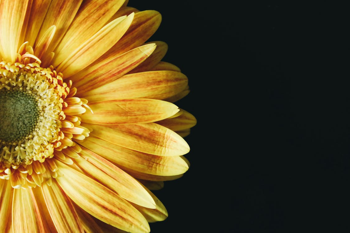 2017-01-08-Yellow Flower