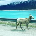 The Rockies, British Columbia