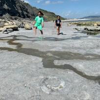 Monmouth Beach, 'Ammonite Pavement', Jurassic Coast, Dorset