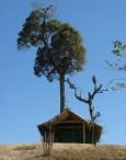 পাসিং পাড়া গির্জা, গাছটা একদিকে কাত হয়ে থাকার রহস্যটা বুঝলাম না (ছবি: লেখক)