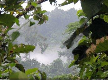 মাত্র ফুট চারেক উপর দিয়ে মেঘেদের উড়ে যাওয়া - নিশাচর