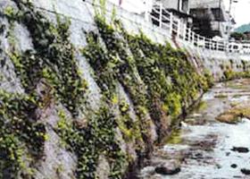 河川護岸擁壁