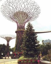The amazing trees and the skywalk in the background