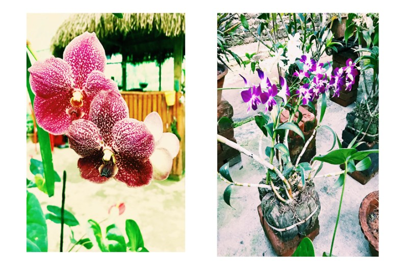 The orchids in Kaziranga National Orchid Park