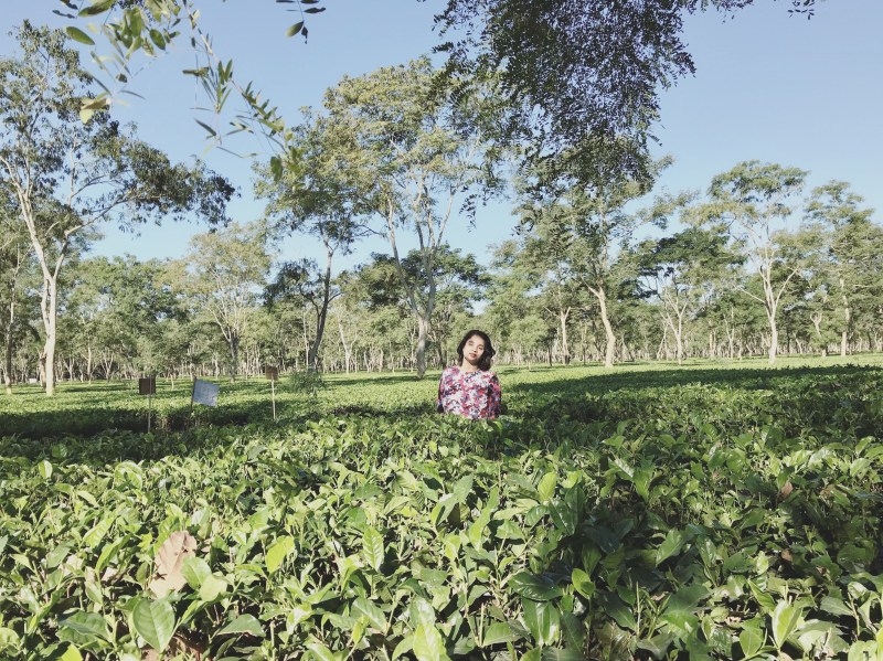 Strolling through the tea gardens in Assam