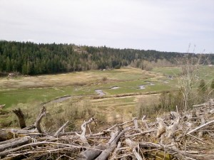Phase I Ohop Creek Restoration
