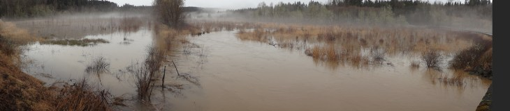 Ohop Creek flooding_upstream at Hwy 7 Bridge - Brian Combs photo