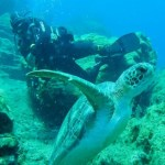 Scuba Diving - Explore the World Under Water