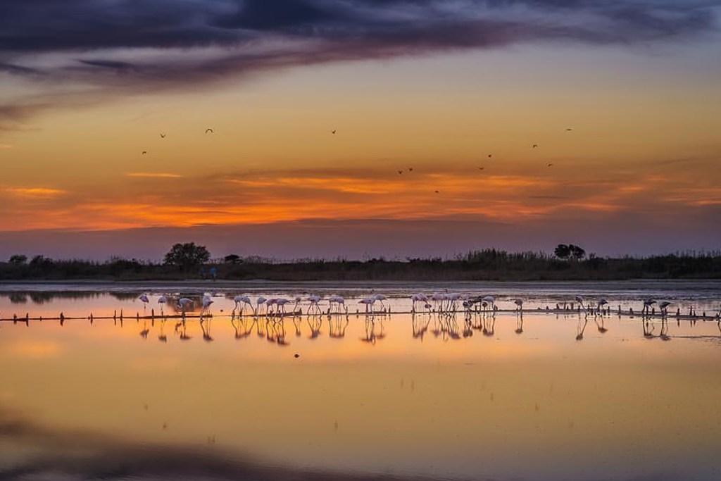 Flamingos at the Saltlake