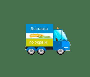 Djstavka po Ukraini