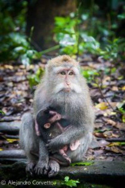 Monkey Temple Ubud