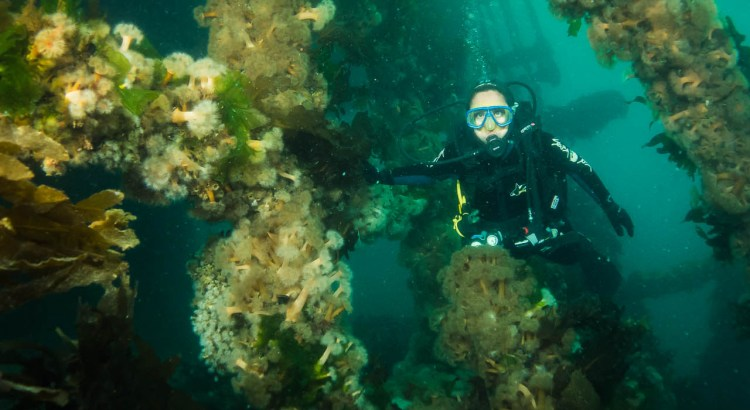 Scuba diving in Puerto madryn Argentina