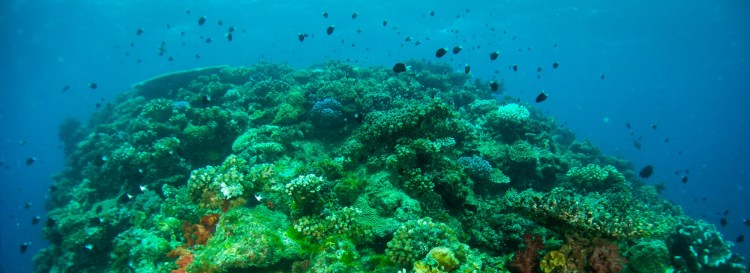 Coral Coast Scuba