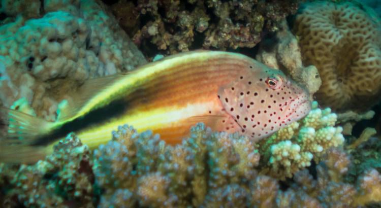 Vida Abordo en el Mar Rojo
