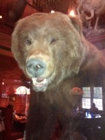 The Bear Sees You With Your Pepsi