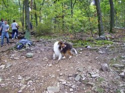 """Sandy was one of the """"hikers"""" who stopped to see the action."""