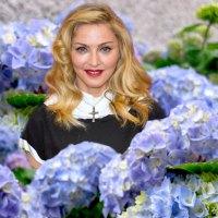 Hydrangea Hating Madonna Crosses The Line