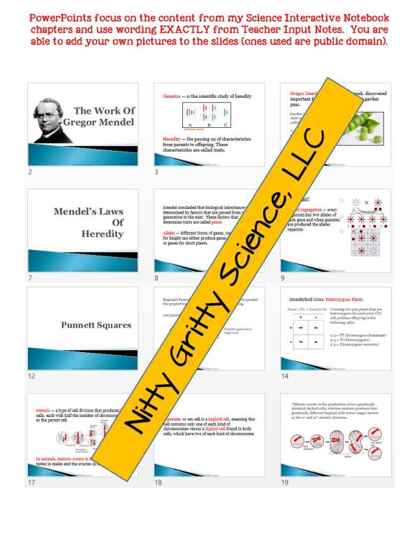 2350521 Page 5 - Genetics - Study of Heredity: Life Science Notes, PowerPoint and Test ~ EDITABLE