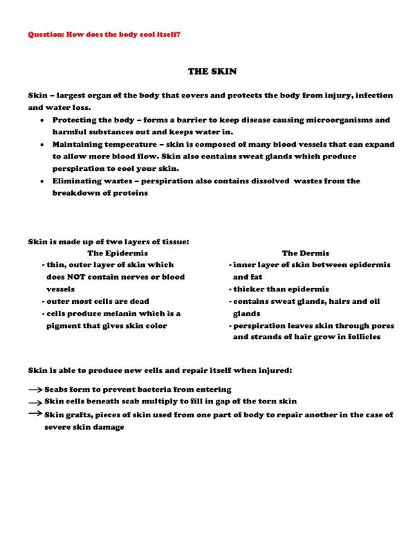 2399151 Page 4 - Human Body - Part 1: Life Science Notes, PowerPoint & Test ~ EDITABLE