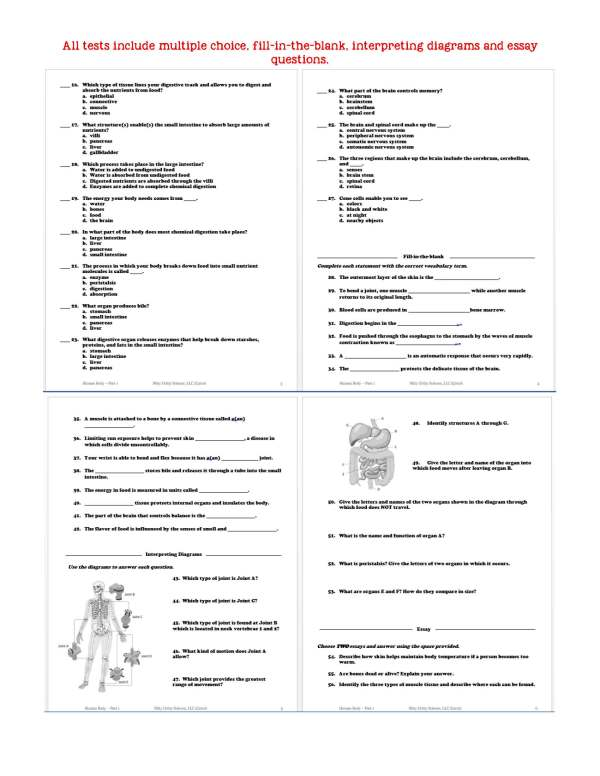 2399151 Page 6 - Human Body - Part 1: Life Science Notes, PowerPoint & Test ~ EDITABLE