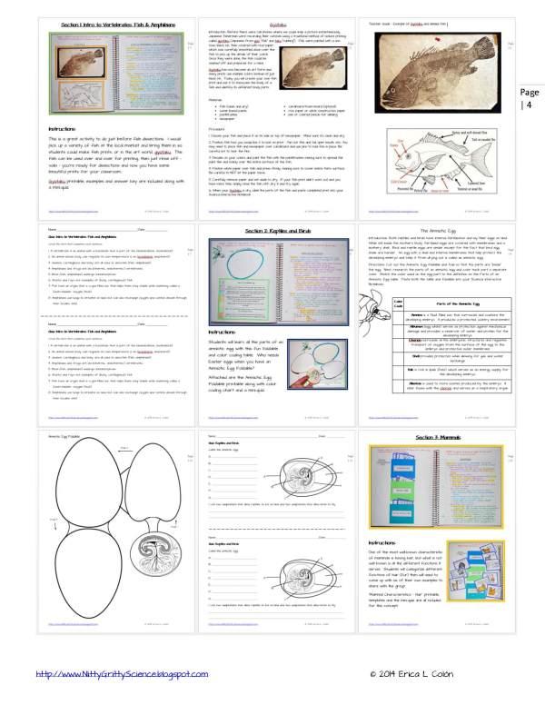 Demo ANIMAL DIVERSITY VERTEBRATES Page 4 - Animal Diversity – Vertebrates