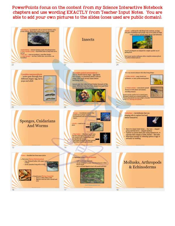 demoLifeScienceNotesPowerPointTestAnimalDiversityInvertebratesEDITABLE2398246 Page 5 - Animal Diversity: Invertebrates Life Science Notes, PowerPoint & Test~ EDITABLE