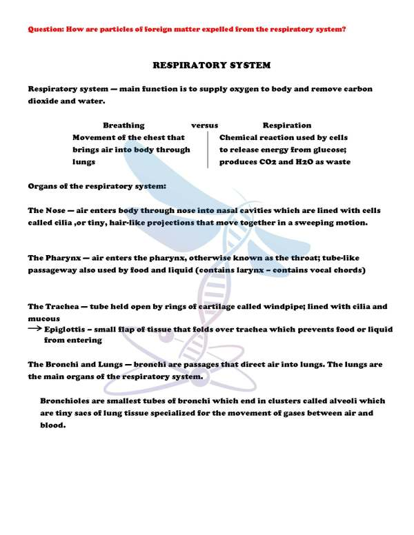 demoLifeScienceNotesPowerPointTestHumanBodyPart2EDITABLE2399168 Page 4 - Human Body - Part 2: Life Science Notes, PowerPoint & Test ~ EDITABLE