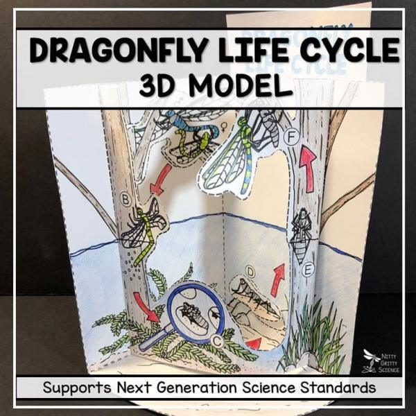dragonfly life cycle model 3d model featured image - Dragonfly Life Cycle Model - 3D Model