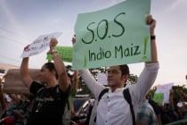 """""""¡Alerta!, ¡Alerta!, ¡Alerta! ¡Alerta que camina, la lucha ambientalista por Indio Maíz!"""" o """"¡Si la patria se quema, uno verde la sueña!"""". Carlos Herrera. Niú"""