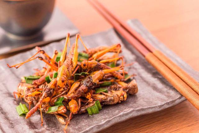 Dieta de insectos