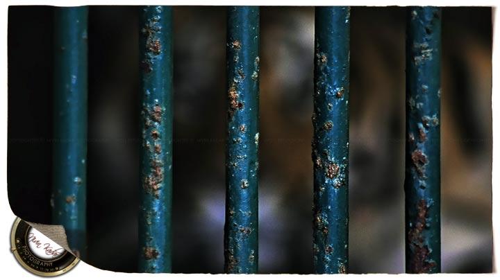 SundayStills: Rust!
