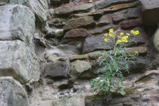 Flowers growing in the walls