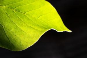 Macrofotografie in de tuin