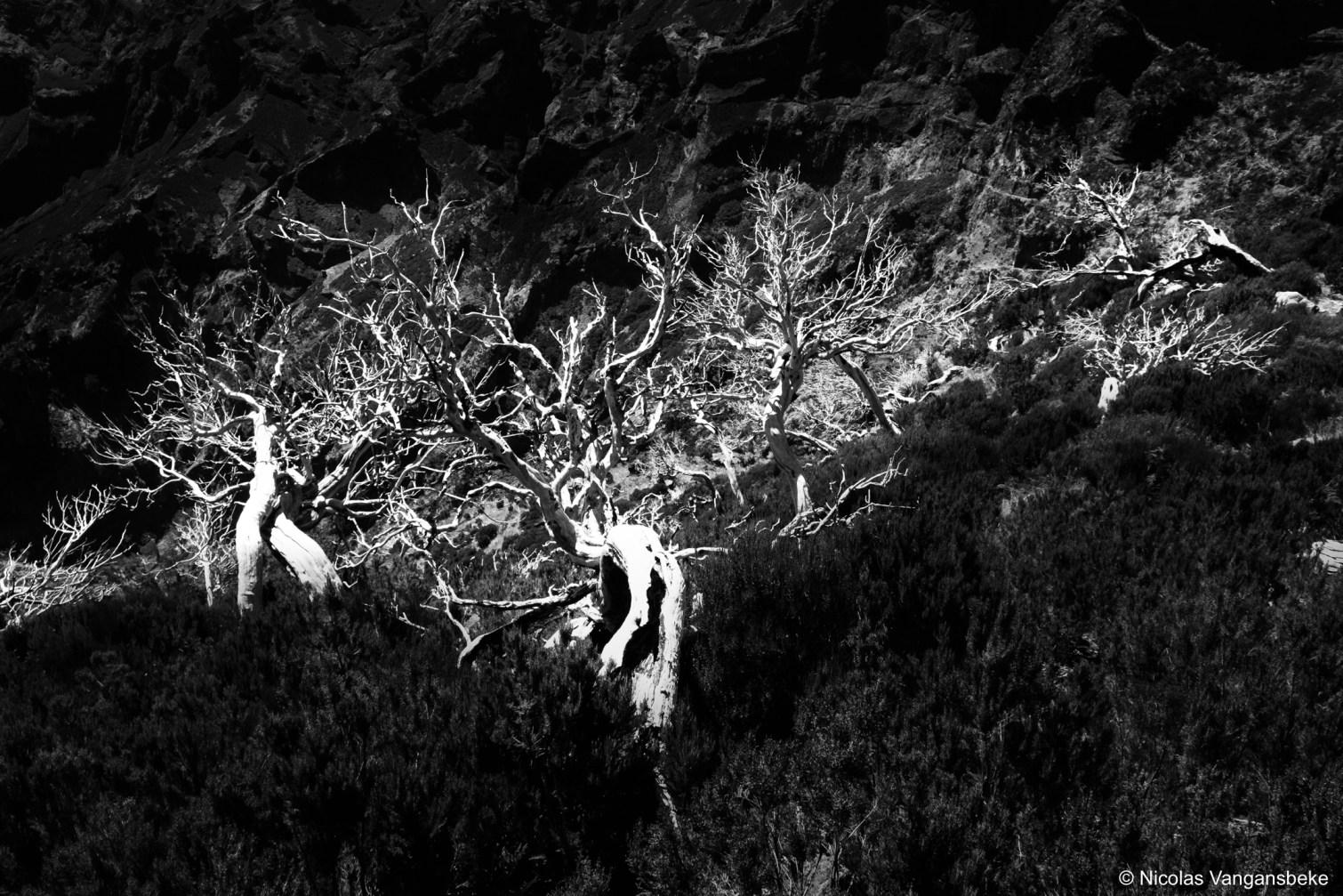 Kunstige bomen in Madeira, Pico Ruivo