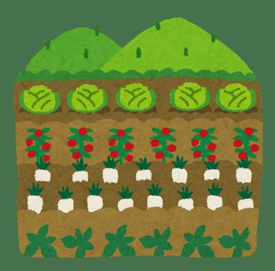シェア畑とは?都会でも簡単に家庭菜園が始められる!?どんなオプションが付いてるの?