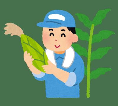 トウモロコシの抑制栽培に挑戦!栽培時期をずらして長く楽しもう!