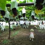 (長野県塩尻市 原遊覧園)毎年お世話に・・・家族で果物狩り~デラウェア&白桃が食べ放題!