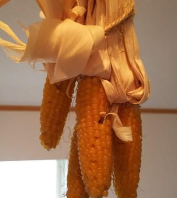 トウモロコシ(ポップコーン)栽培方法!ポップコーンにも色々な品種があった!