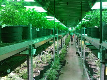 Colorado Grow House