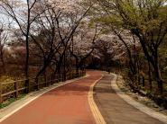 Namsan trail 2
