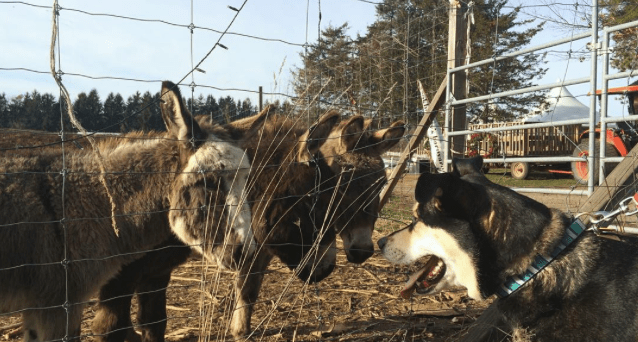 8 Petting Zoos in NJ