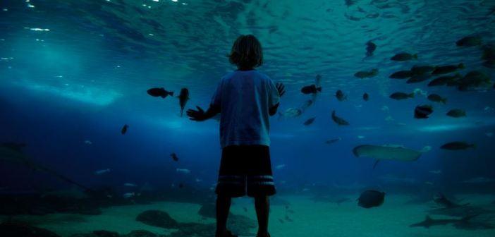 aquariums in nj