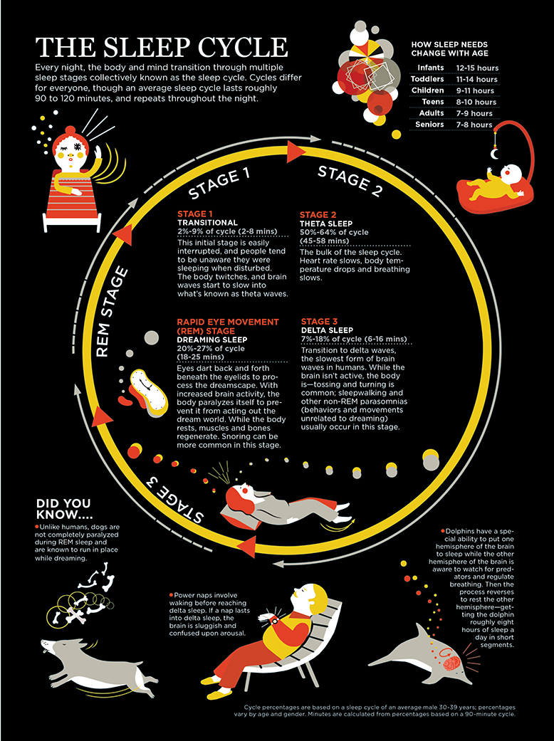 explanation of stages of sleep cycle