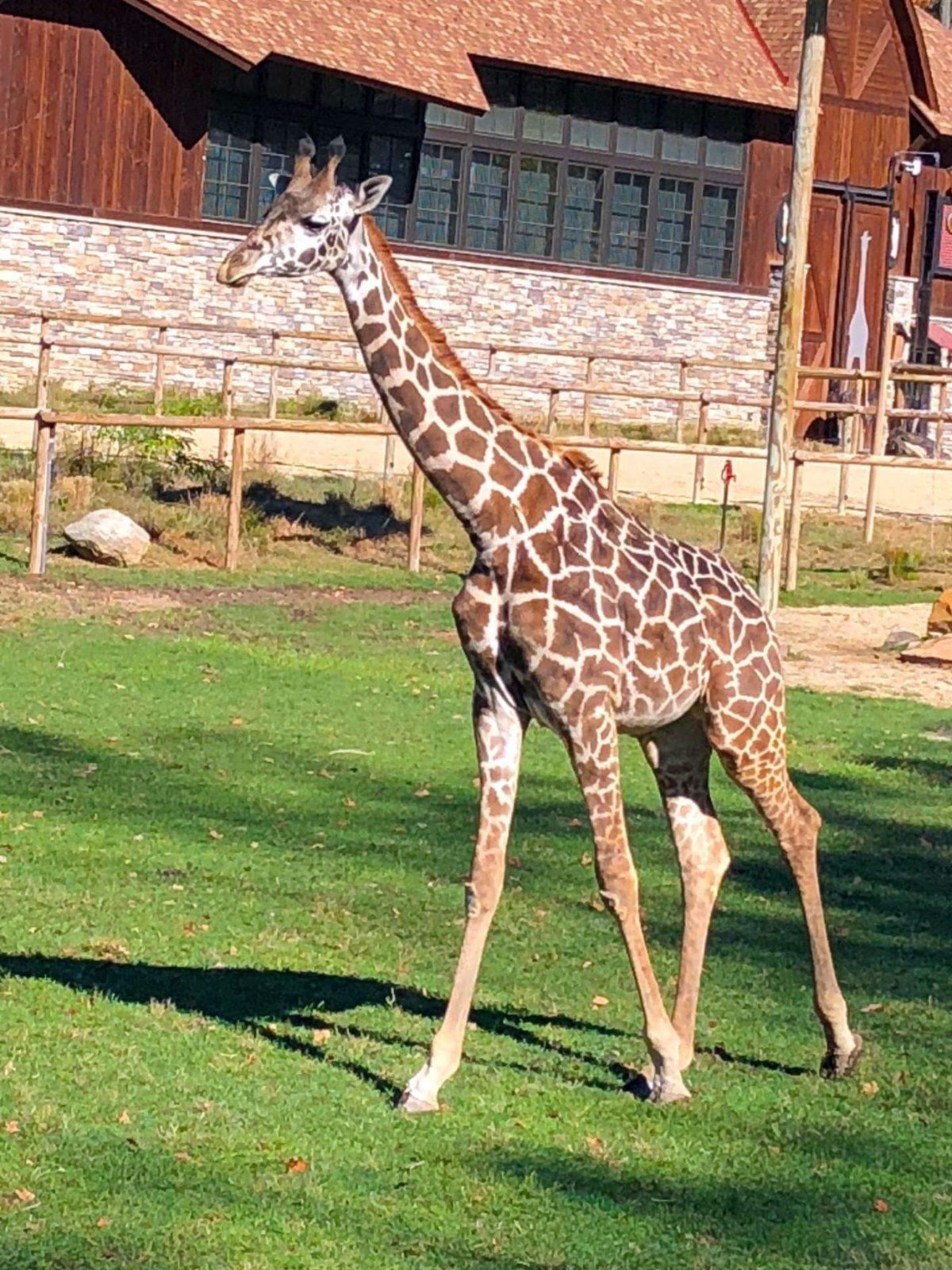 dufoe_southmountain_zoo