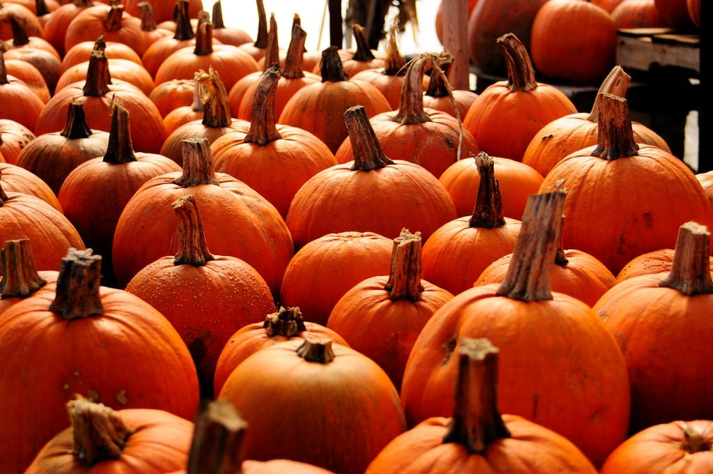 8 Best Places in NJ For Pumpkin Picking This Fall