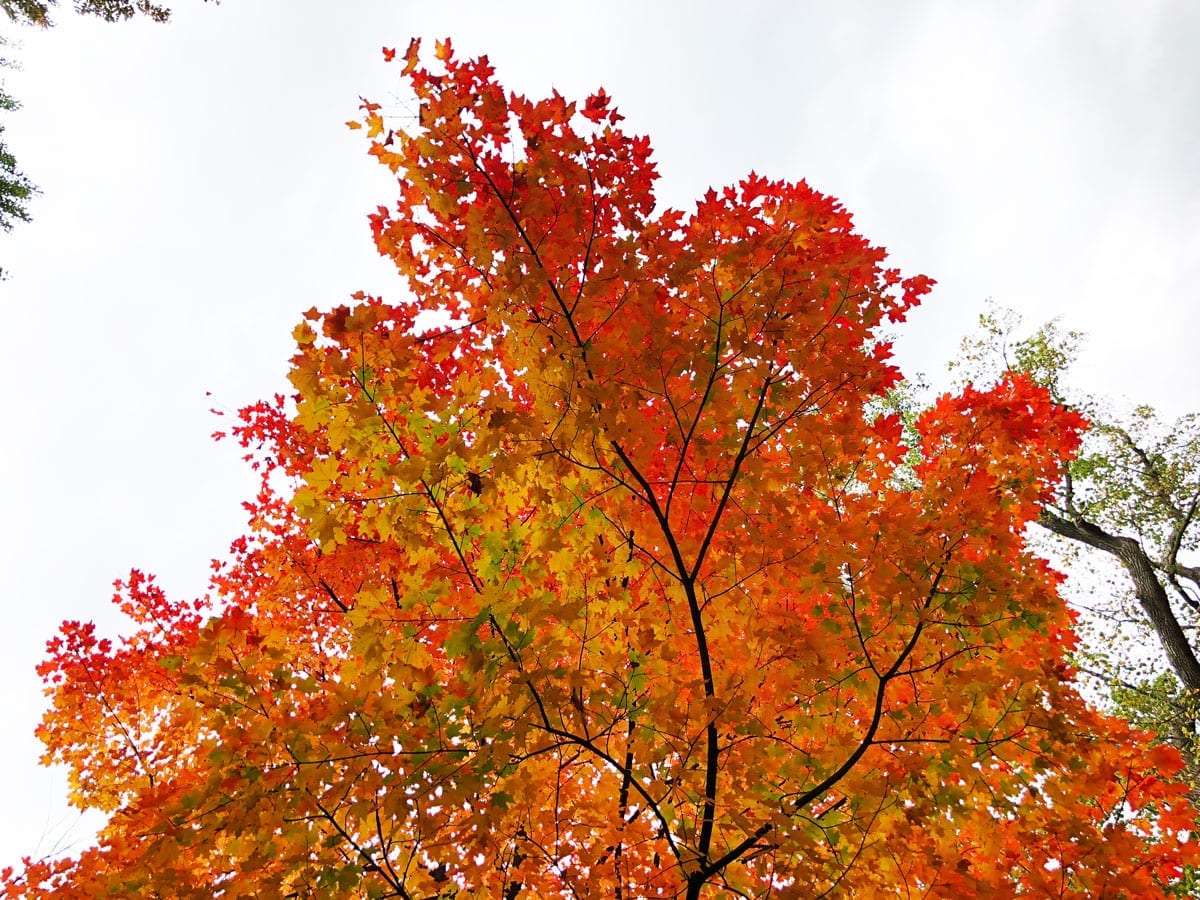 The 14 Best Places to Capture the Leaves Changing in New Jersey