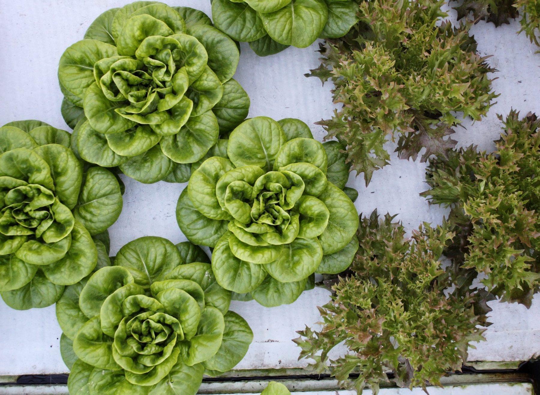 Giving Season: 3 Ways Mill Creek Urban Farm Is Doing Just That