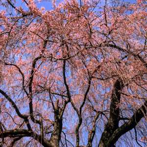 Read more about the article Spring into Action: 6 Tips for Tree Planting in the Garden State
