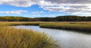 Read more about the article Three Best Spots in Cheesequake State Park